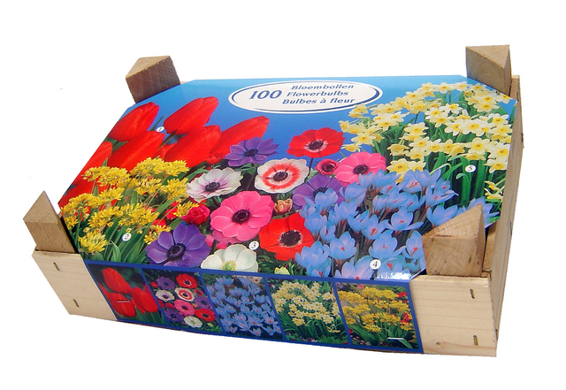 achat bulbes fleurs en m lange en ligne pas cher. Black Bedroom Furniture Sets. Home Design Ideas