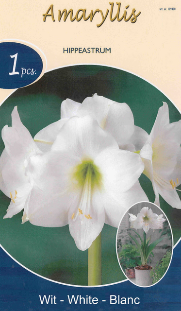 Achat amaryllis blanc en ligne pas cher for Amaryllis achat bulbe
