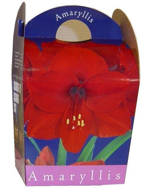 Bulbes fleurs vente de tous les bulbes de fleurs for Acheter amaryllis