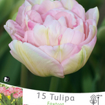 Tulipes Angelique (en vrac)