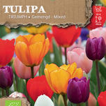 Tulipes Triumph Mix Biologique