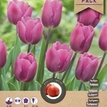 Tulipe Triumph Blue-Purple