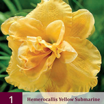 Hemerocallis Yellow Submarine