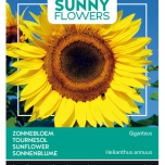 Tournesol - Sunny Flowers - Helianthus uniflorus gig.