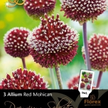 Allium Amethystinum Red Mohican - Ail d'ornement